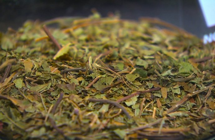 Newborn goes into withdrawal after mother drank kratom tea while pregnant