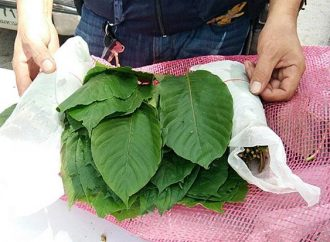 One tonne of kratom leaves seized