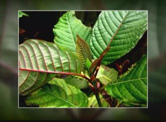 St. Charles Co. executive wants ban on kratom