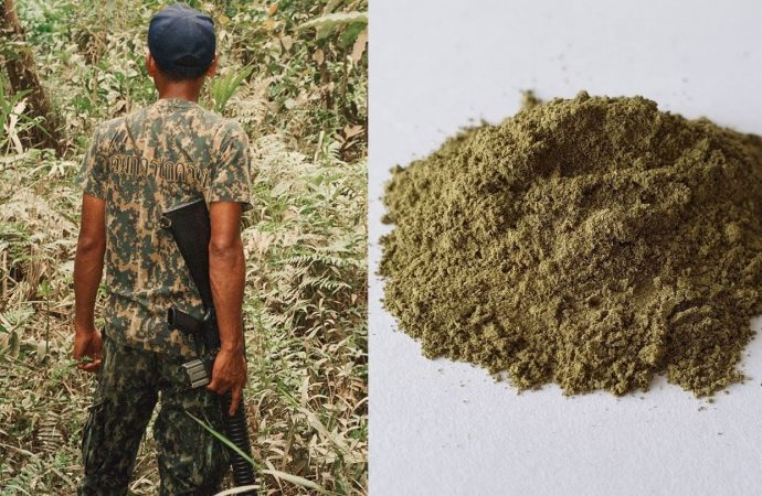 A Herbal Plant From Southeast Asia Could Be Banned For Being As Addictive As Morphine