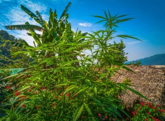 Citizens of Thailand May Soon Be Allowed To Grow Their Own Cannabis