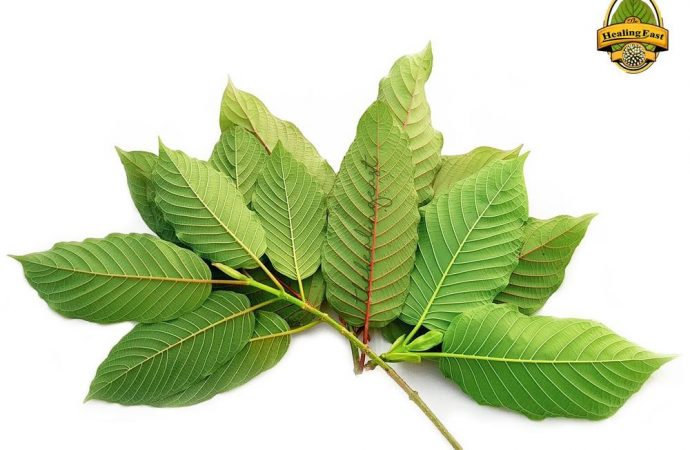 What Is Kratom and Why is It So Controversial in San Francisco