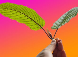 A new kratom report maps one possible future for the drug