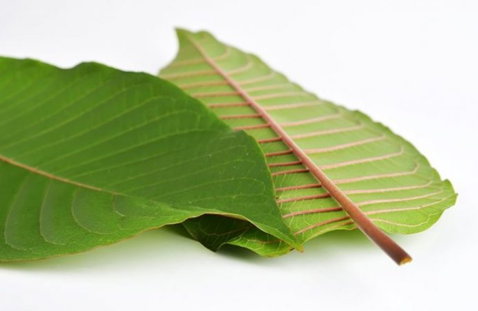 Healthy Benefits and Risk of Red Kratom – 2020 Guide